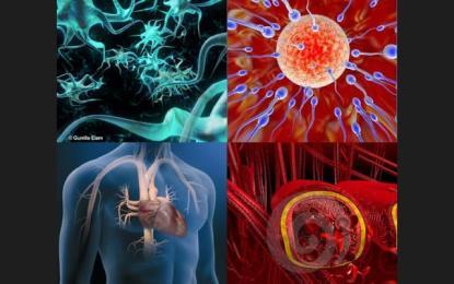 Maravillas del cuerpo humano